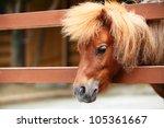 Brow Miniature Horse. Outdoors