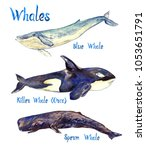 whales species collection  blue ... | Shutterstock . vector #1053651791