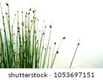 flower of green reed or grass... | Shutterstock . vector #1053697151