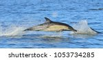 dolphins  swimming in the ocean.... | Shutterstock . vector #1053734285