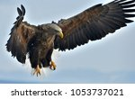 adult white tailed eagle in...   Shutterstock . vector #1053737021