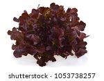 red oak lettuce on white... | Shutterstock . vector #1053738257
