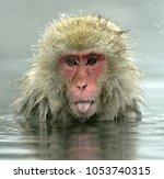 snow monkey in natural hot...   Shutterstock . vector #1053740315