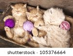 Stock photo exotic kittens sleeping with a ball of wool 105376664
