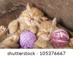 Exotic Kittens   Sleeping With...