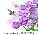 Flowers And Hummingbirds On White Background - stock photo