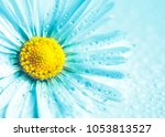 selective focus of daisy... | Shutterstock . vector #1053813527