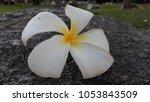 leelawadee flowers on the rocks ... | Shutterstock . vector #1053843509