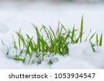 grass from under the snow | Shutterstock . vector #1053934547