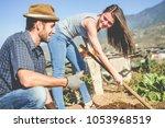 workers harvesting fresh... | Shutterstock . vector #1053968519