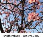 a beautiful peach flower... | Shutterstock . vector #1053969587