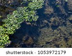 Small photo of water weed on clear water