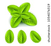 fresh mint leaves 3d photo... | Shutterstock .eps vector #1054076519