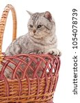 kitten in a basket isolated on... | Shutterstock . vector #1054078739