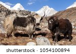 Small photo of yak, group of two yaks on the way to Everest base camp, Nepal Himalayas yak is farm an d caravan animal in Nepal and Tibet