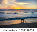 Stock photo big dog plays fetch in the waves at dawn 1054118894