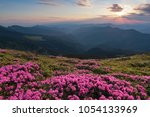 from the lawn covered with...   Shutterstock . vector #1054133969