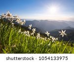 landscape with beautiful...   Shutterstock . vector #1054133975
