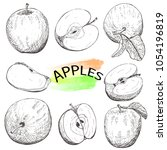 hand drawn apples set isolated... | Shutterstock .eps vector #1054196819