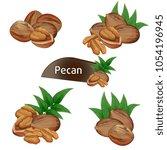 Pecan Kernel In Nutshell With...