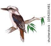 Kookaburra Bird On A Branch...