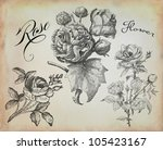 old rose illustration | Shutterstock . vector #105423167