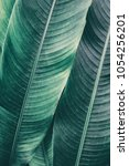 detail of tropical leaf for... | Shutterstock . vector #1054256201
