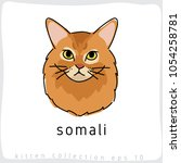somali   cat breed collection   ... | Shutterstock .eps vector #1054258781