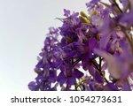 purple flower background for... | Shutterstock . vector #1054273631