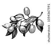 olive branch. black ink drawing ...   Shutterstock .eps vector #1054367591