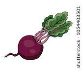 fresh beet with leaf. vector... | Shutterstock .eps vector #1054403501