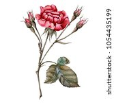 flower of a rose with buds.... | Shutterstock . vector #1054435199