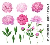 floral elements set with pink... | Shutterstock .eps vector #1054454075