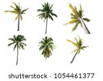 palm tree isolated on white... | Shutterstock . vector #1054461377