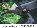 small cute adventure cat in the ... | Shutterstock . vector #1054568135