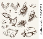 chicken breeding. collection of ... | Shutterstock .eps vector #105456911