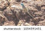 lizard on stone rock | Shutterstock . vector #1054591451
