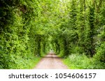 trees and bushes along straight ... | Shutterstock . vector #1054606157