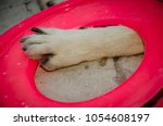 Mestizo Dog Paw With Flying...