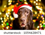 dog breed labrador brown color... | Shutterstock . vector #1054628471