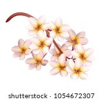 plumeria flowers. realistic... | Shutterstock .eps vector #1054672307