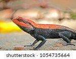 a lizard on ground | Shutterstock . vector #1054735664