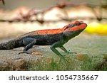 a lizard on ground | Shutterstock . vector #1054735667