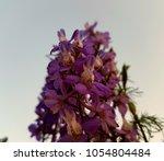 purple flower background for... | Shutterstock . vector #1054804484