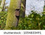 Bird Booth Hung On A Tree....