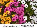 spring flowers background | Shutterstock . vector #1054883567