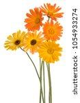 studio shot of yellow and...   Shutterstock . vector #1054933274
