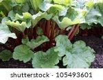 A Healthy Rhubarb On A Bright...