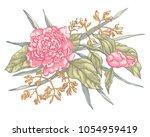 Vector Peony Flower Isolated O...