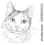 vector outline monochrome... | Shutterstock .eps vector #1055015111